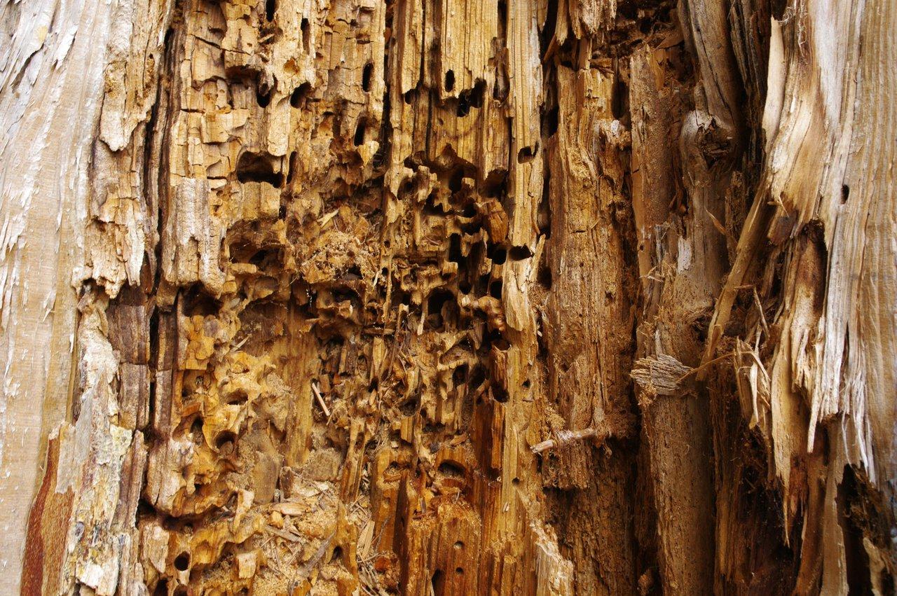 Konstruktiver Holzschutz Schutz Furs Holz Gut Geplant